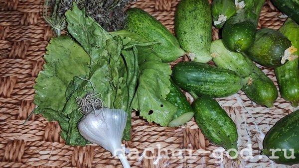 Вкуснейшие хрустящие малосольные огурчики - простой рецепт в банке